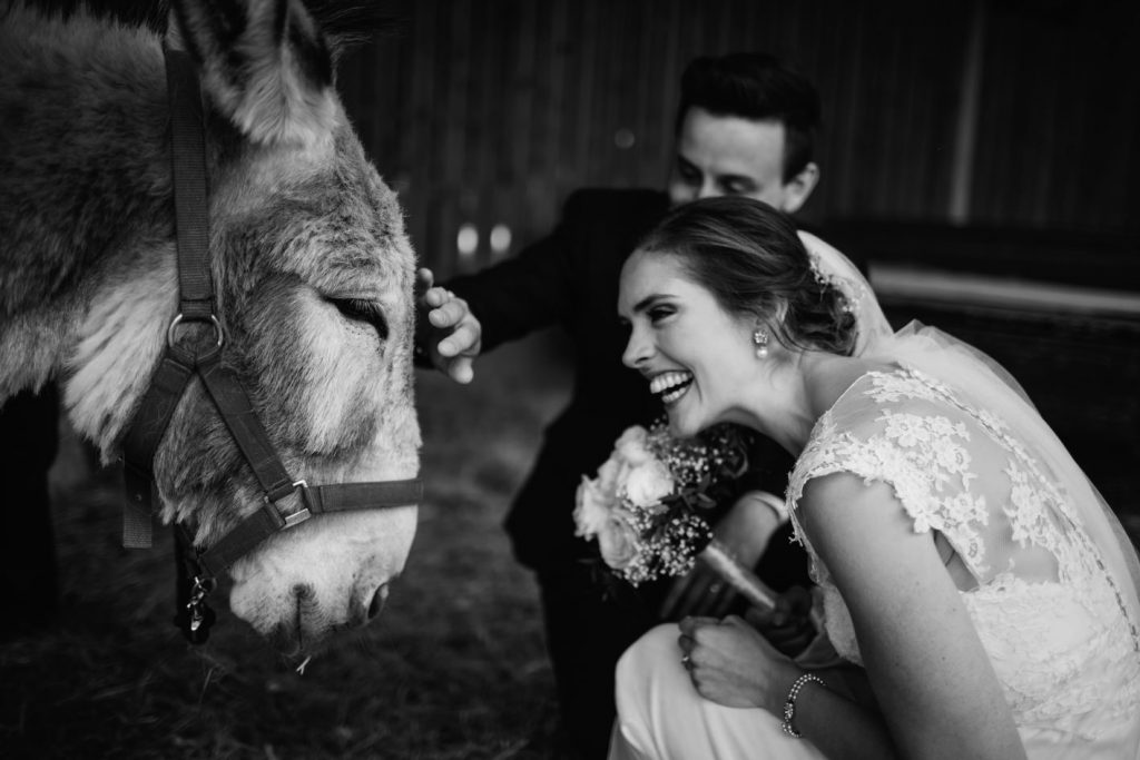 bride with donkeys