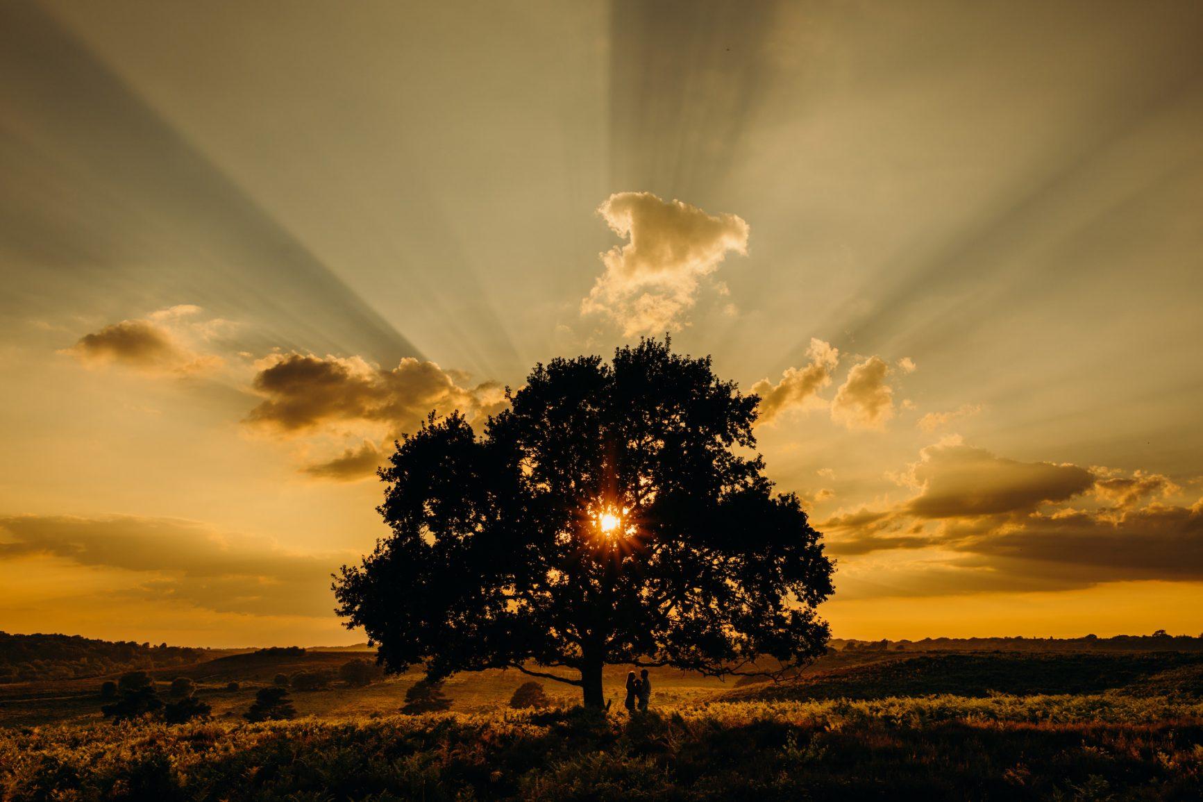 Sunset over an oak tree at Wedding