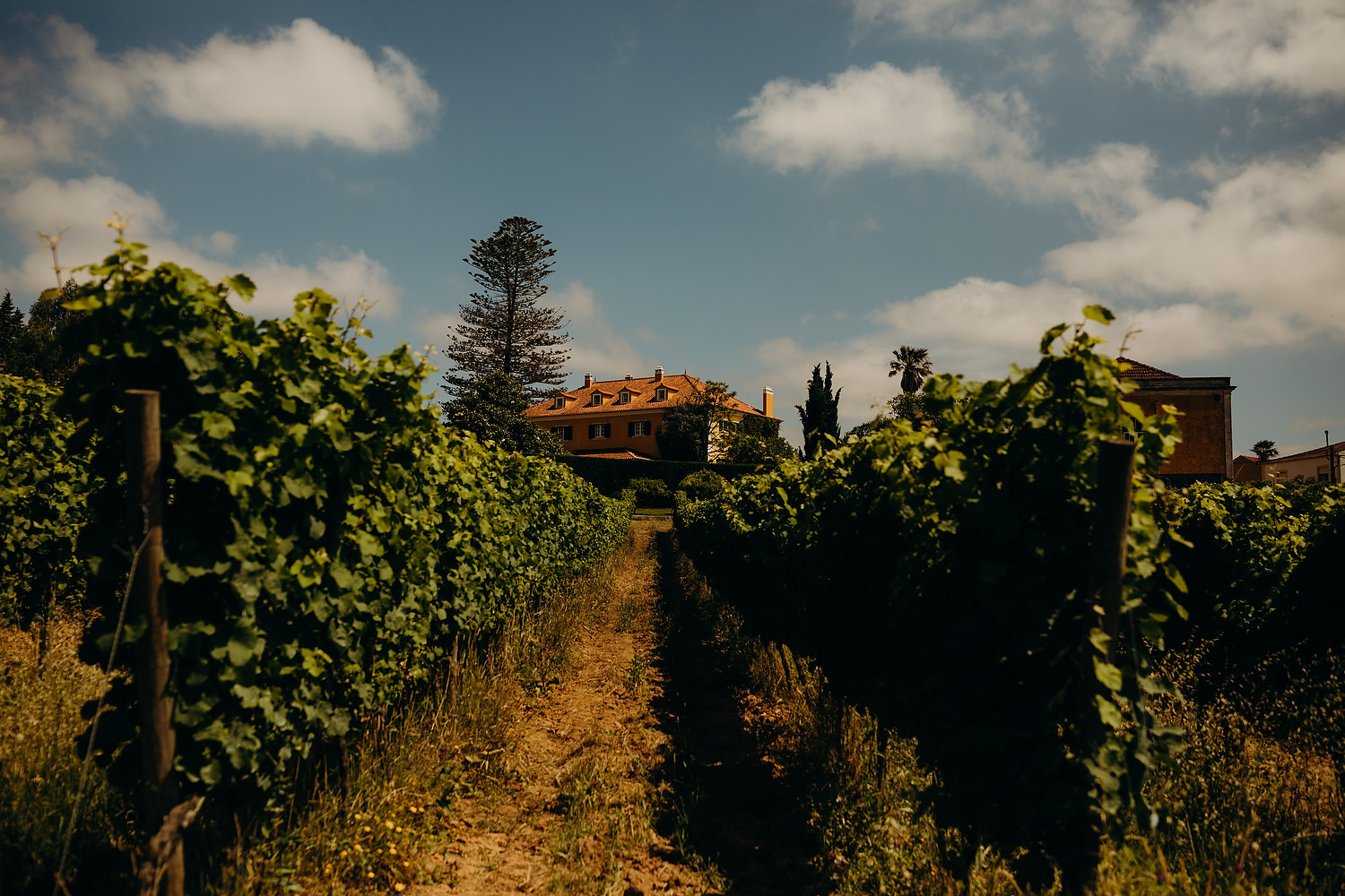 Portugal Vineyard wedding
