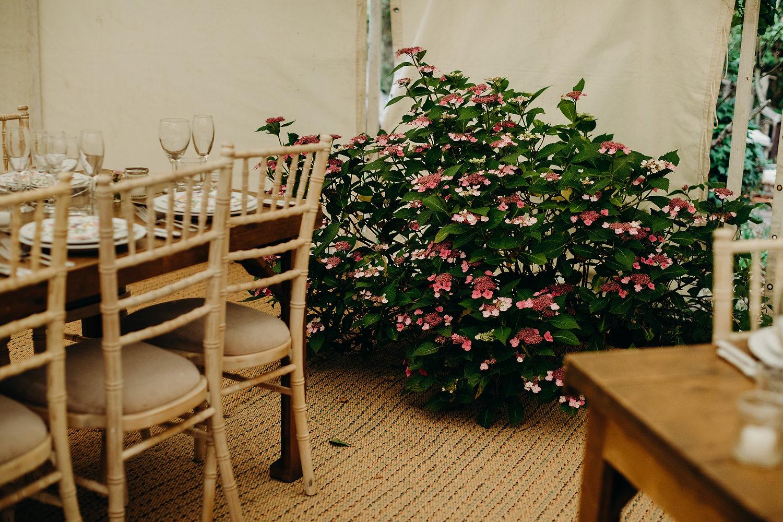 bush grows inside wedding marquee