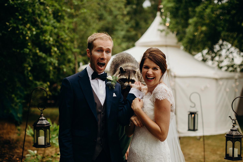 raccoon at wedding