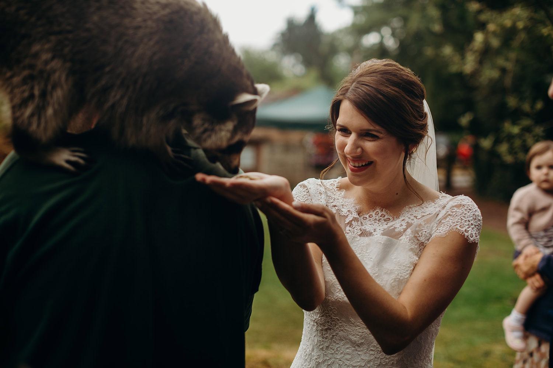 bride feeds raccoon