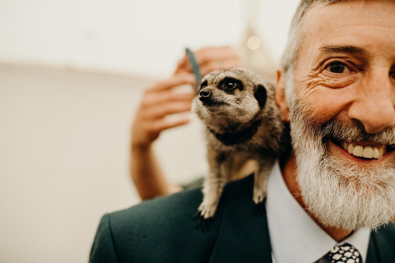 meerkat at wedding
