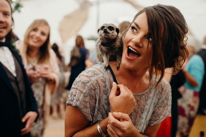 petting zoo at wedding